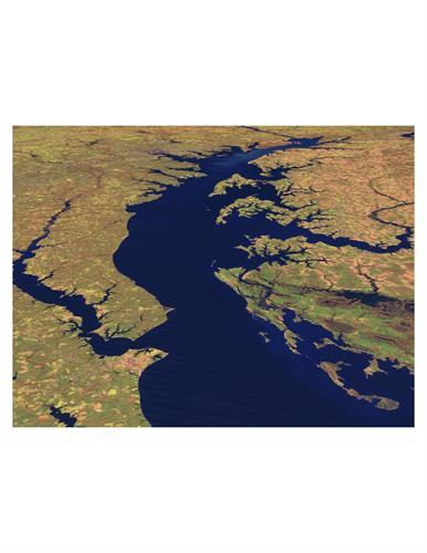 Estuary Acupuncture