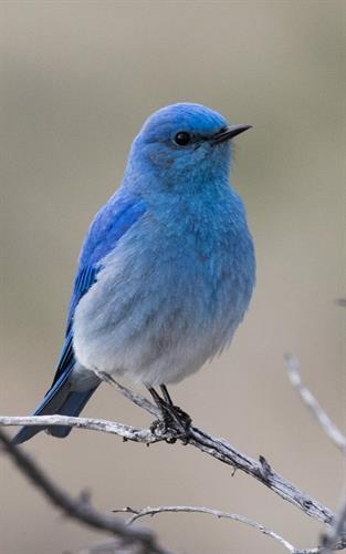 Bluebird Studio