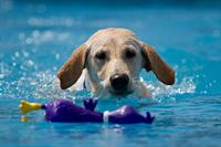 Paws Aquatics Canine Swim Center