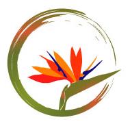 Bloom Yoga: Grow Your Practice