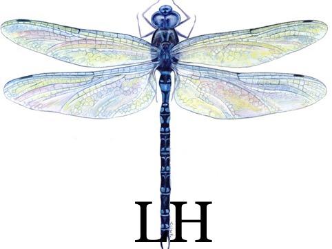 Liliia Hermes